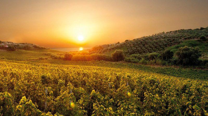 Cirò ed il Gaglioppo, il vino olimpionico.