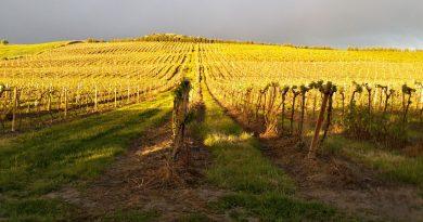 Dell'Aera, cinque generazioni di amore per il vino