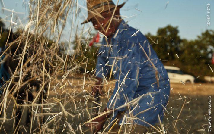 Il grano, una storia antica