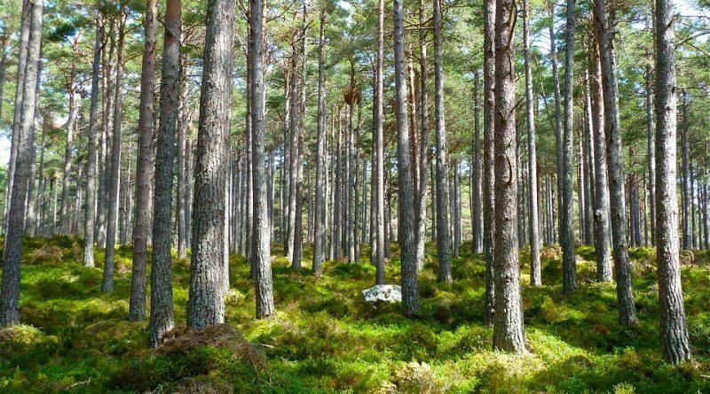 Le foreste italiane in espansione: opportunità all'insegna della sostenibilità